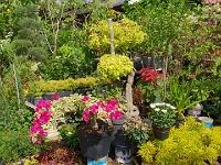 bloemen en planten markt malang